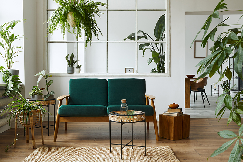 Can Plants Improve Indoor Air Quality?